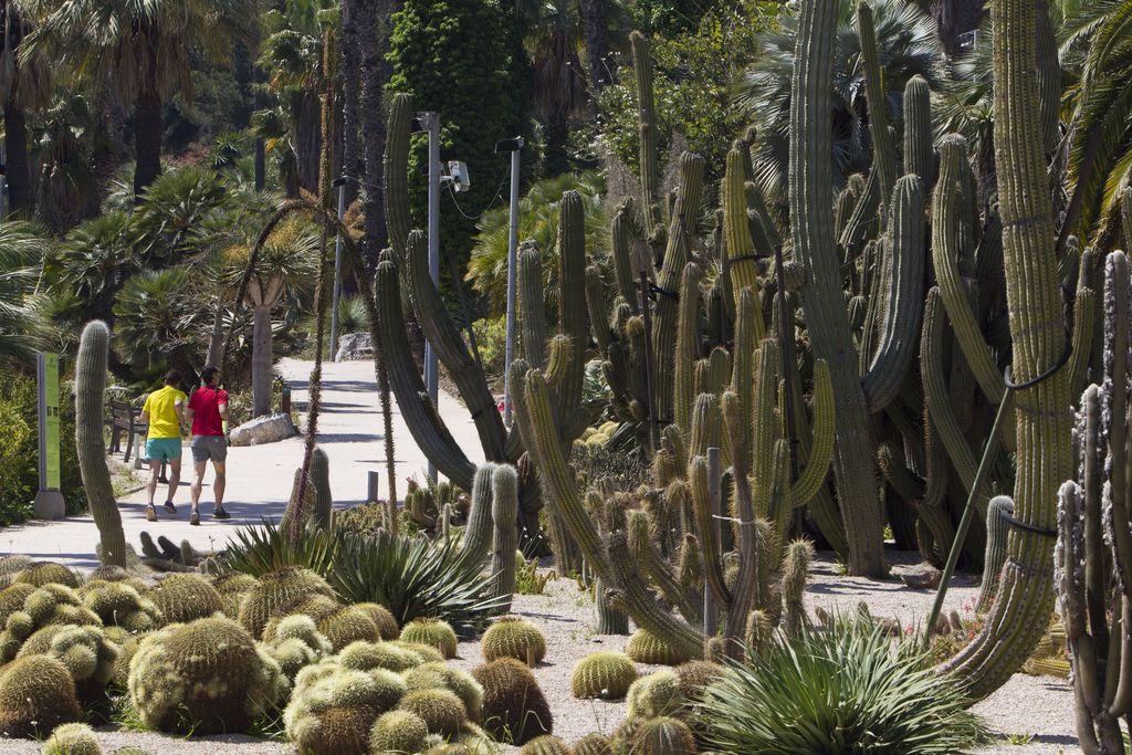 Jardins de Mossèn Costa i Llobera. Cactus